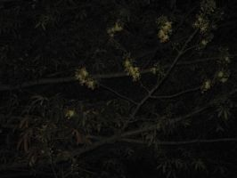 Flower Tree at Night by AbstractWater