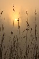 Reed Sunrise by HoremWeb