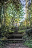 Steps into the forest - HDR by teslaextreme