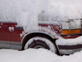 Bumper Deep in the Snow by TomRedlion