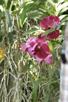 view to orchids by ingeline-art