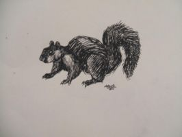 Black squirrel by oblivion-of-sanity