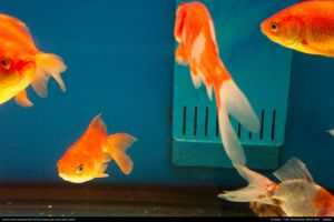 Fish Stock 0006 by phantompanther-stock