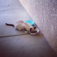 Ms. Jacks' first meal at our house. by ZhaneAugustine