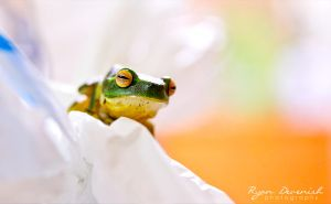 Frog - Canon 60D by RDography