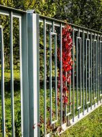 Red leaves and fence by saltov-man