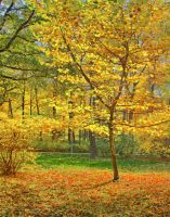 Colours of autumn II by starykocur