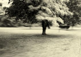 Tree in Motion by coog7444