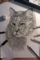 my cat drawing progress 5 by SunnyFire