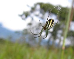 Spider in the cloud forest by WeirdBugLady
