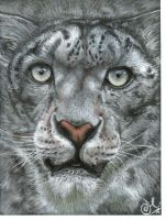 snow leopard by xxx-ellie