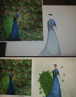 Peacock WIP I by Photopathica