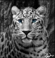 Amur leopard: Innocent kity by woxys