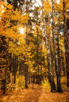 Autumn Days II by OrangeRoom
