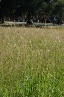 Where the Grass Grows Wild by ImaginingJackie