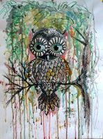 colour owl by PinkaArt