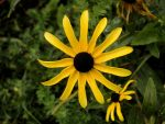 Nature_Flower_daisy 01 by Aimelle-Stock