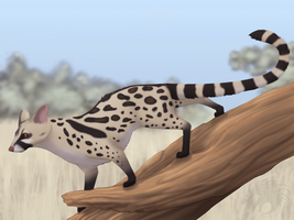 Large Spotted Genet by Gul-reth