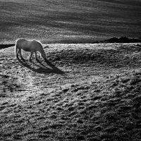 Kirkcudbright: horse+paddock by Coigach