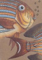 ATC fish collage by crazyruthie