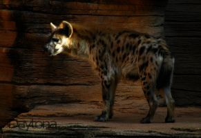 For Roland: Spotted Hyena by DaytonaBlue64Impala