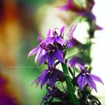 violet flower . .. by light-from-Emirates