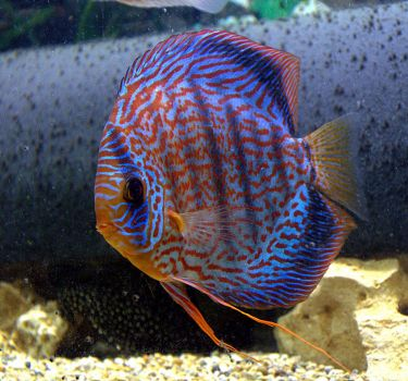 Discus by PomPrint