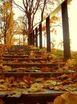 Fallen leaves by Meireis