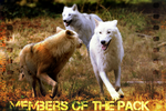 Members of the Pack by WhiteWolfCrisis13