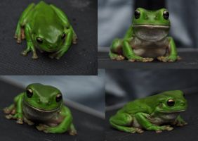 Harry The Frog (By Tracie76stock-d5vl60y) by DuhBatista