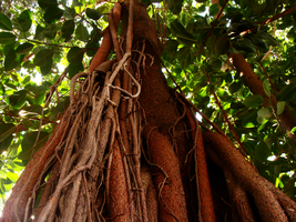 Branches2 by Manwathiell-Stock