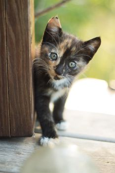 Curious Kitten by pricegotphoto