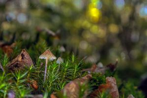 mushrooms12 by hubert61