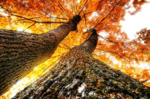 HDR-Trees by OlafKorb