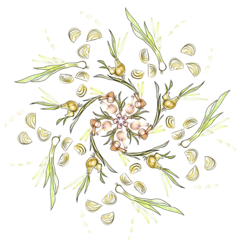 Swirl of Onions by CatSpaceDesign