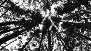 Trees by TimmyTa