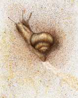 Mr. Snail by RivenPine