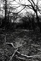 forest_b_w by Spennasaurus