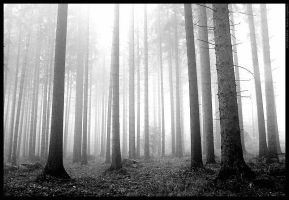 Autumn forest bw by mjagiellicz