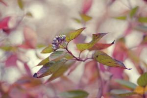 autumn soft by SelenaAdorian