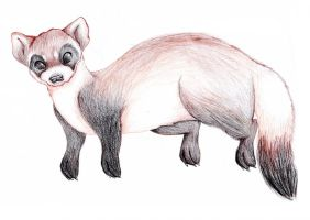 Black-footed Ferret by GreenCulus