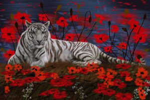 White Tiger by RandyAinsworth
