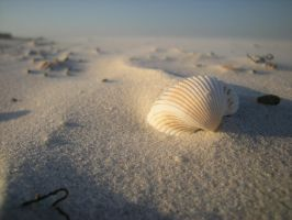 Sea Shell by cooler81