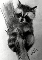 baby raccoon by deikochan