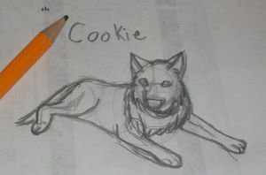 Cookie sketch by Colliequest