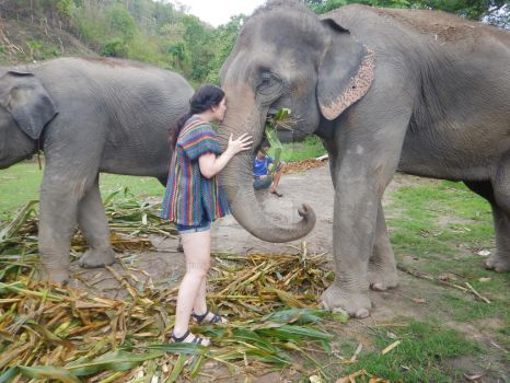 Playing with Elephants by Belly-Button-Monster