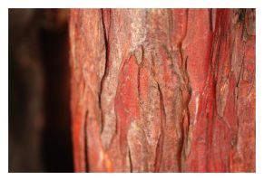 wood you like it red? by tom2strobl