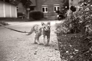 Odi on a walk. by CRuS23