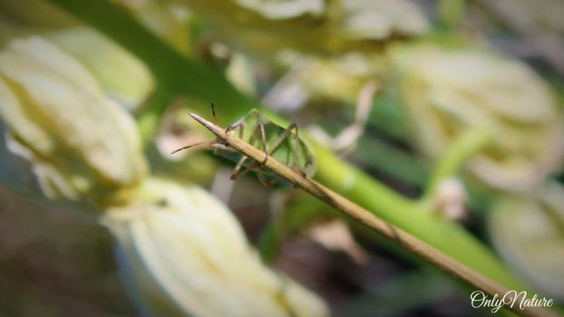 Holding On For Dear Life (Green Shield Bug) by OnlyNature