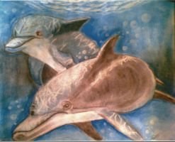 Dolphins by Sarah-Maxine